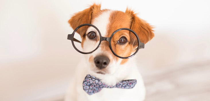 hardest dog breed quiz